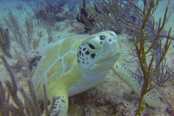 6ab9dc5f26763 Playa del Carmen Diving Lessons